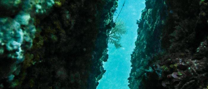 Vue sous-marine Figuière