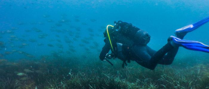 banc de poissons et plongeur Figuière