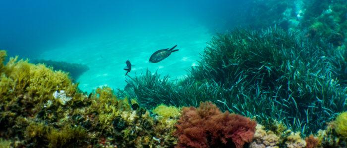 poissons plongée sous-marine