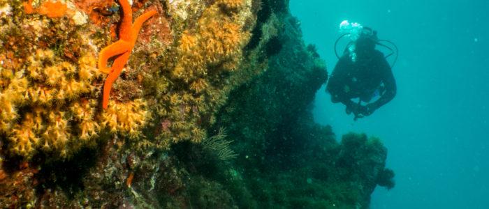 plongeur Madrague de Gignac